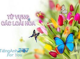 Từ vựng tiếng Anh về các loại hoa
