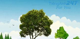 Từ vựng tiếng Anh về cây cối