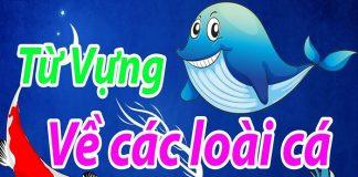 Từ vựng tiếng Anh về các loại cá
