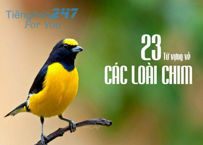 Từ vựng tiếng Anh về các loài chim